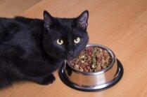 Ko darīt, ja kaķītis daudz ēd