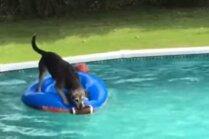 Video: Šunelis izdomā veidu, kā bez saslapināšanās dabūt bumbu no baseina