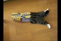 Video: Populārākais kaķis pasaulē – dažāda izmēra kastītēs lienošais Maru