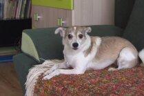 Nobijies suns – bīstams un nekontrolējams. Kā situāciju mainīt