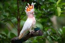 Miris viens no pasaulē vecākajiem papagaiļiem, kas reģistrēts rekordu grāmatā