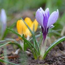 Весенняя обработка сада от вредителей и болезней и как ее правильно проводить