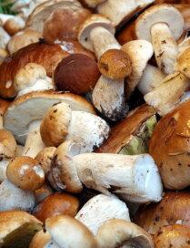 Солим грибы по изданию 1909 года: три рецепта