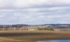 Ērgļiem šogad nepietiek peļu un varžu putnēnu barošanai, satraucas 'Latvijas Valsts meži'