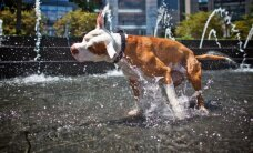 Sinoptiķi brīdina par stipru karstumu pēcpusdienā