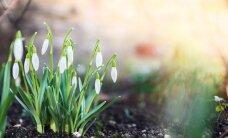 Brīvdienu ceļvedis: kur doties, lai sajustu pavasara atnākšanu?