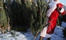 11. novembra krastmalā iemirdzēsies svētku egle
