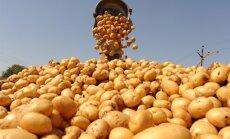 Baltkrievija aizliedz no ES ievest kartupeļus