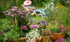 Kas darāms dārzā no 24. līdz 31. jūlijam?