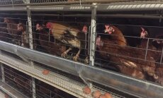 Foto: 'Alūksnes putnu ferma' atklāj jaunu ražotni; ieguldīti seši miljoni eiro