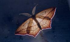 Sestdien pie Šlīteres bākas tiks vēroti nakts kukaiņi