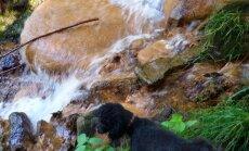 Dāvida dzirnavu avoti – romantikas apvītie ūdenskritumi meža ielokā pie Cēsīm
