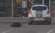 Par kautiņa neizšķiršanu Bauskā policistam draud kriminālatbildība