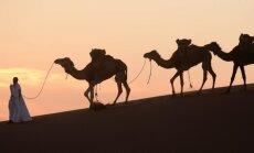 Dzīvniektiesību aizstāvji nosoda 'Google' par kamieļa izmantošanu