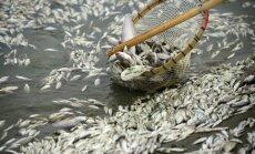Skābekļa trūkuma dēļ ezerā Minsterē nobeigušās 20 tonnas zivju