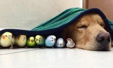 Neparasts draugu bariņš: suns, astoņi putni un viens kāmītis