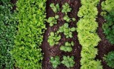 Pārbaudītas patiesības: augu saderība sakņu dobē