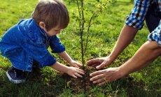 Kādus kokus stādīt klajā piemājas teritorijā