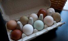Газета: в Латвии может возникнуть дефицит белых яиц