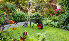Лунный календарь для садовых работ на 20-26 августа 2018 года