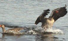 Aculiecinieks: neparastas pārdomas, skatot parastas putnu fotogrāfijas