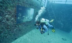 Video: Izveidota mākslas galerija okeāna dzelmē