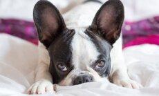 ВИДЕО: Американец научил собаку лаять шепотом