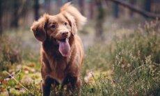 10 laimīgas dzīves noteikumi ikdienā ar suni