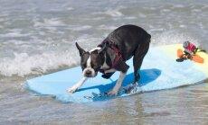 Garākā sērfošanas distance un citi draisko suņu uzstādītie rekordi