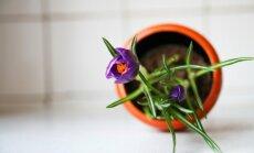 No dēstu audzēšanas līdz vainagu veidošanai: dārza darbi martā