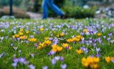 Foto: Eiropas pilsētās ienāk reibinošs pavasaris