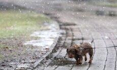 Trešdien daudzviet īslaicīgi līs, galējos austrumos iespējams arī slapjš sniegs