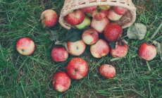 Samazinātais PVN augļiem un dārzeņiem nesis pozitīvus rezultātus, vērtē LOSP