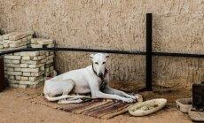 Pieņemts rīcības plāns cīņai ar dzīvnieku kontrabandu Eiropā