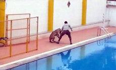 Video: Indijas skolā leopards desmit stundās savaino sešus cilvēkus
