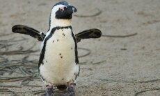 Из-за пингвинов заблокирован проект на 2,5 млрд долларов