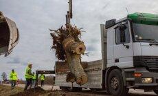 Foto: Ceļu remonta dēļ 'evakuē' aizsargājamas skudras un ķērpjus