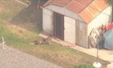 Video: ASV policijas suns no šķūnīša izvelk noziedznieku