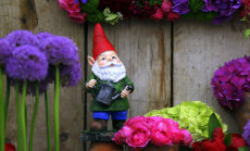 Idejas dārzam, ko aizņemties no slavenā Čelsijas ziedu šova