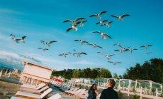 БПБК проверит договор аренды земли под кафе сына Красовицкого в Юрмале