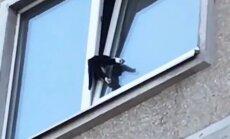 ФОТО, ВИДЕО: В Золитуде пожарные спасают застрявшего в окне кота