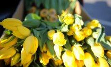 Tirgotāji: pirms 8.marta aug pieprasījums pēc ziediem, saldumiem un dzirkstošā vīna