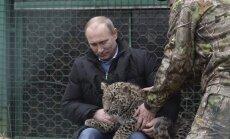 Putins uztur savu mačo imidžu un pozē ar Persijas leopardu
