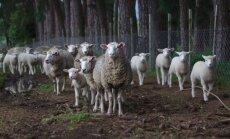 Kad aitu skaitīšana nelīdz. Izplatītākie miega traucējumu cēloņi