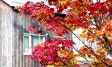 Синоптики: в Латвии установится нетипично теплая погода