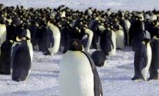Krievija piekāpjas, ļaujot Antarktikā izveidot pasaulē lielāko jūras rezervātu