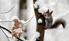 Pārspēts šīs ziemas aukstuma rekords: Rucavā gaiss atdzisis līdz - 22,4 grādiem