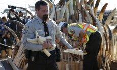 Foto: ASV samaļ tonnām ziloņkaula figūriņu un greznumlietu