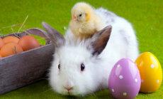 Zaļā ceturtdiena, Pūpolsvētdiena un Lieldienas – ko tev nozīmē šīs dienas?