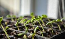 Sagaidi pavasari lieliskā pašsajūtā - vienkārši veidi, kā attīrīt organismu